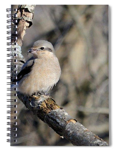 Northern Shrike Spiral Notebook
