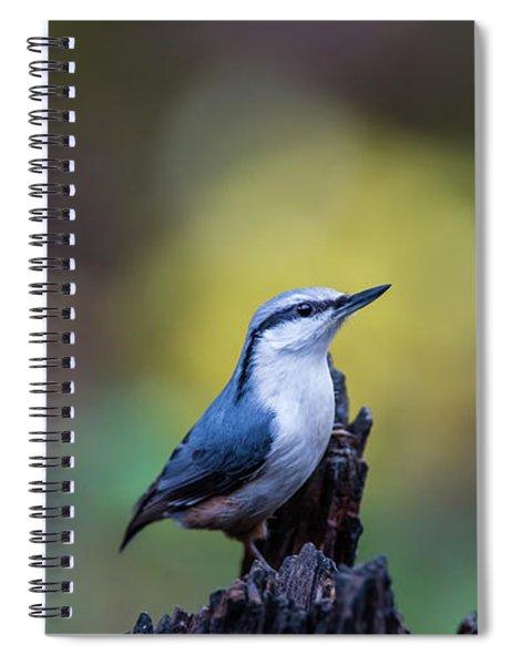 Nuthatch On The Spot Spiral Notebook