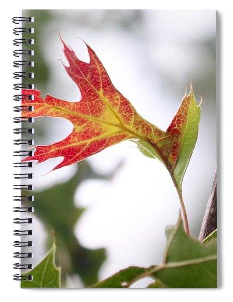 Oak Leaf Turning Spiral Notebook