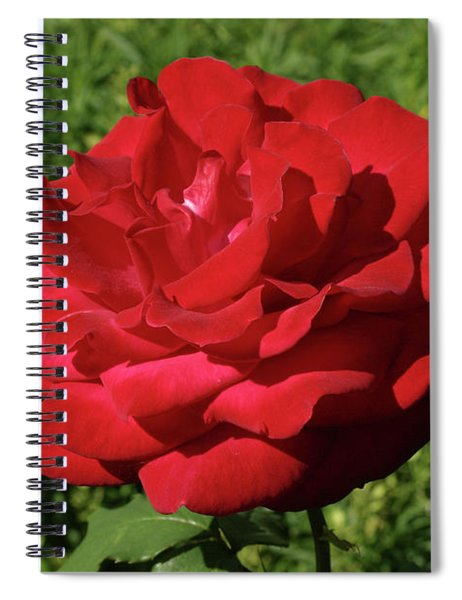 Oh The Blood Red Rose Spiral Notebook
