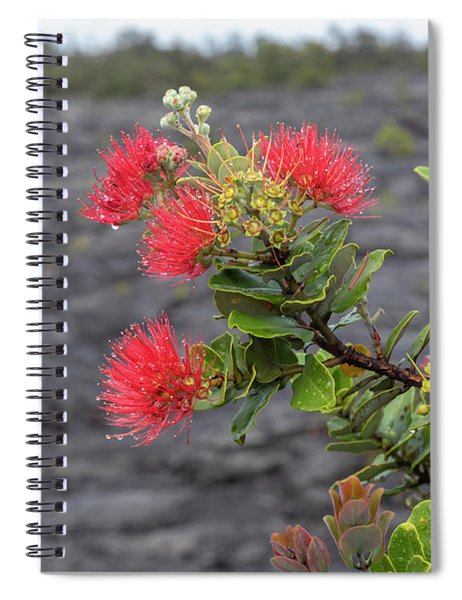 Ohia Blossoms Spiral Notebook