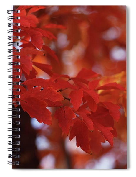 Orange And Red Fantasy Spiral Notebook