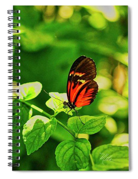 Orange Butterfly On Leaf Spiral Notebook