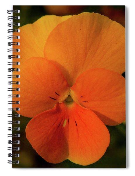 Orange Cream Spiral Notebook