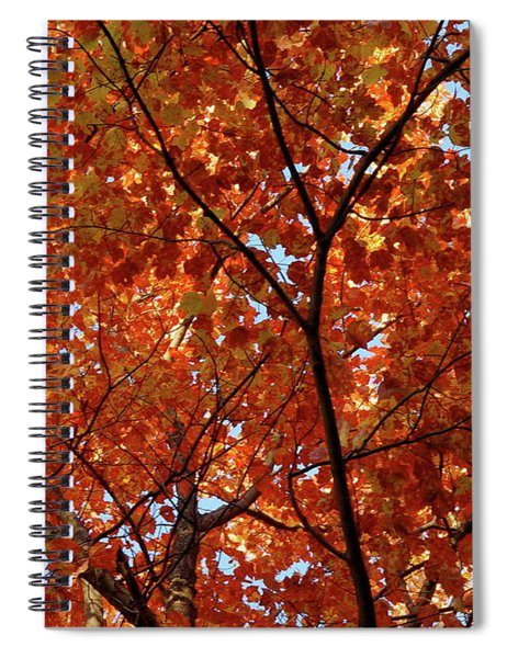 Orange Everywhere Spiral Notebook