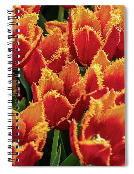 Orange Fringe Tulips Spiral Notebook