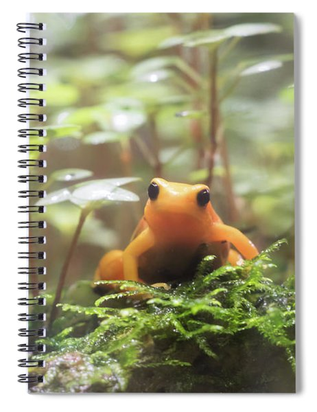 Spiral Notebook featuring the photograph Orange Frog. by Anjo Ten Kate