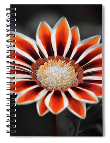 Spiral Notebook featuring the photograph Orange Only Gazania by Patti Whitten