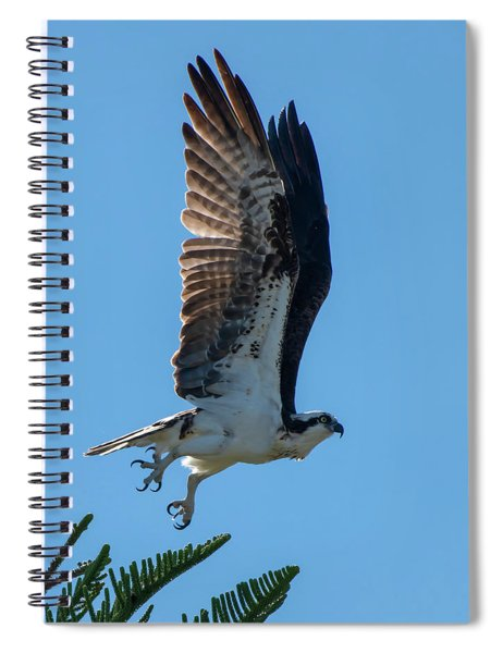 Osprey Taking Flight Spiral Notebook