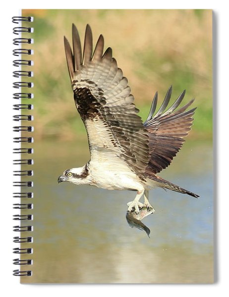 Osprey With Trout Spiral Notebook