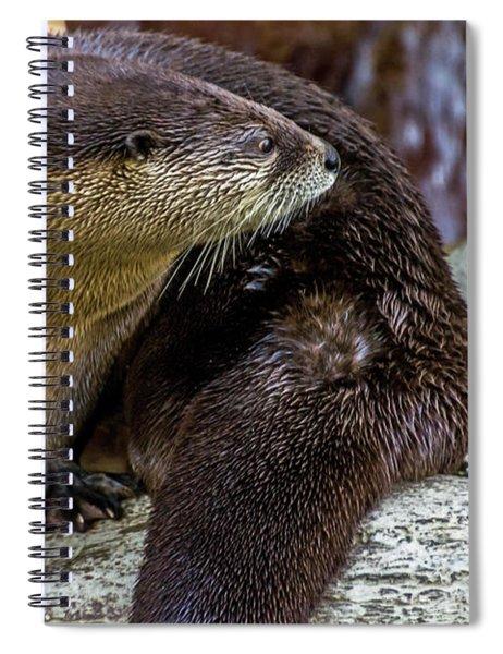 Otter Interrupted Spiral Notebook