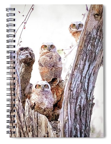 Owl Trio Standing Guard Spiral Notebook