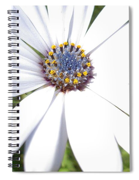 Page 13 From The Book, Peace In The Present Moment. Daisy Brilliance Spiral Notebook