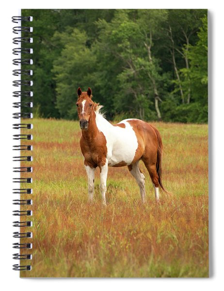 Paint Horse In Pasture Spiral Notebook