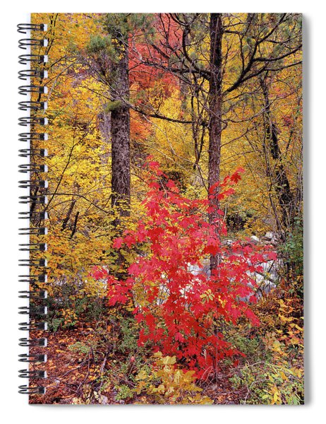 Painted Forest Spiral Notebook