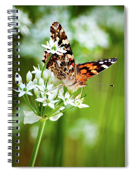 Painted Lady II Spiral Notebook