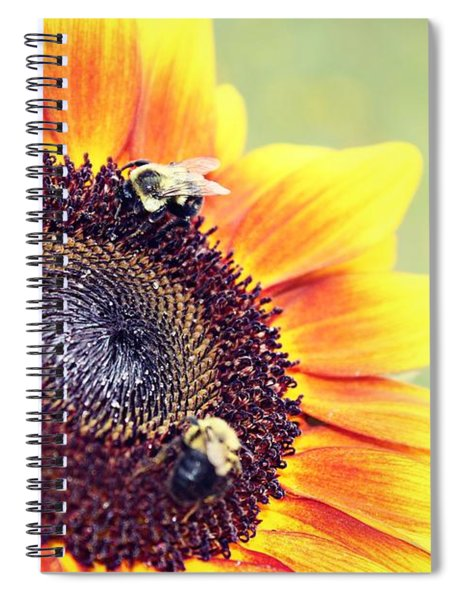 Painted Sun Spiral Notebook