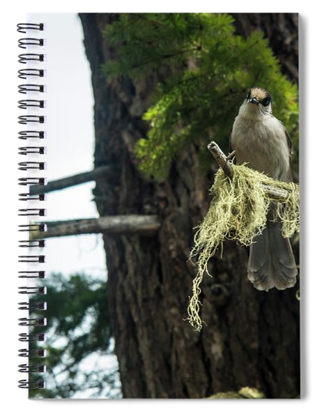 Pair Of Gray Jays Spiral Notebook