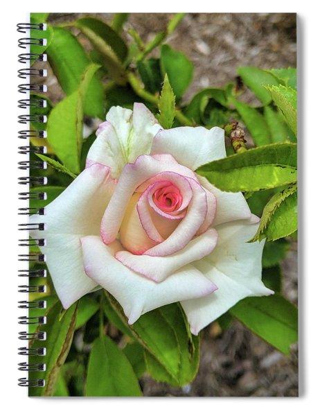 Pale Rose Spiral Notebook