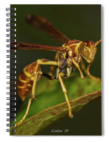 Paper Wasp Spiral Notebook