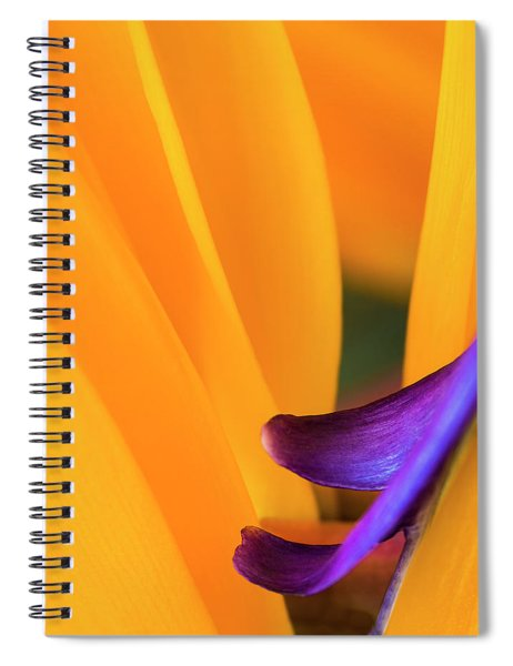 Paradise Bird Spiral Notebook