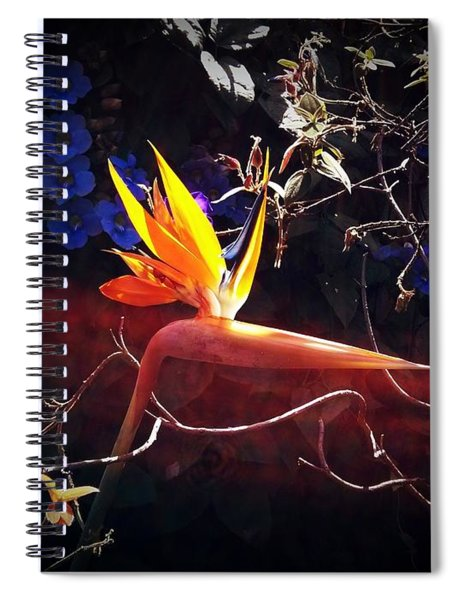 Paradise Gained Spiral Notebook