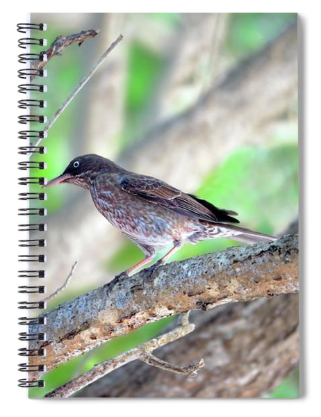 Pearly Eyes Spiral Notebook