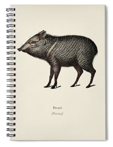 Pecari Illustrated By Charles Dessalines D' Orbigny  1806-1876  Spiral Notebook