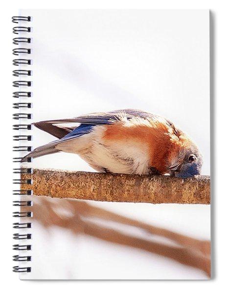 Peek-a-boo Blue Bird Spiral Notebook
