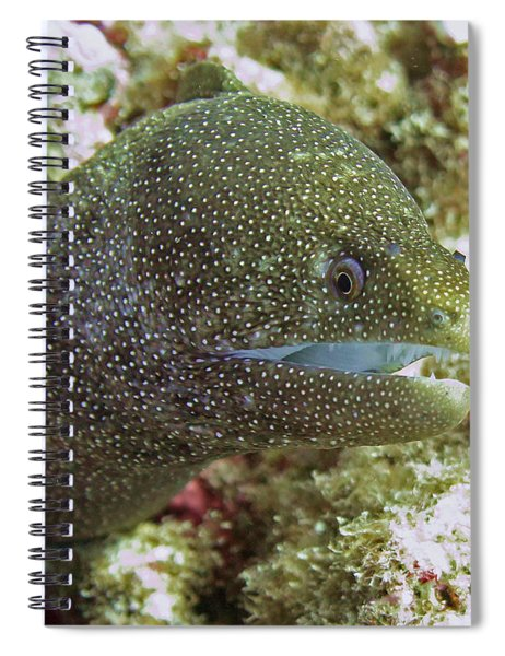 Peeking At Me Spiral Notebook