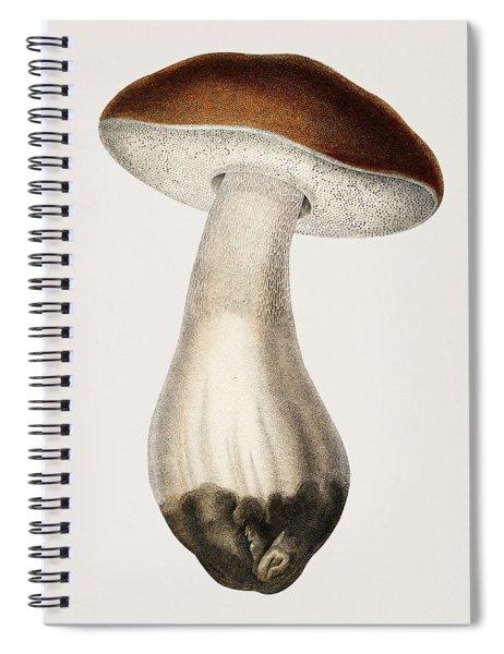 Penny Bun  Boletus Edulis  Illustrated By Charles Dessalines D' Orbigny  1806-1876 1 Spiral Notebook