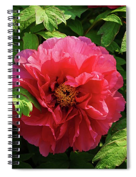 Peony Perfection In Pink Spiral Notebook
