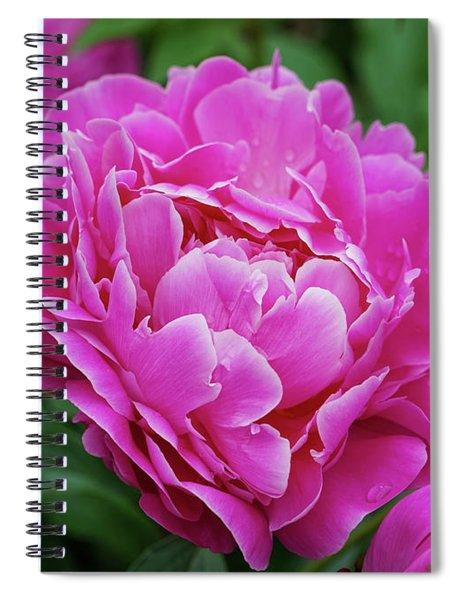Peony Season Spiral Notebook