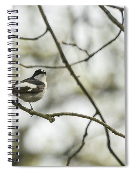 Pied Flycatcher Spiral Notebook