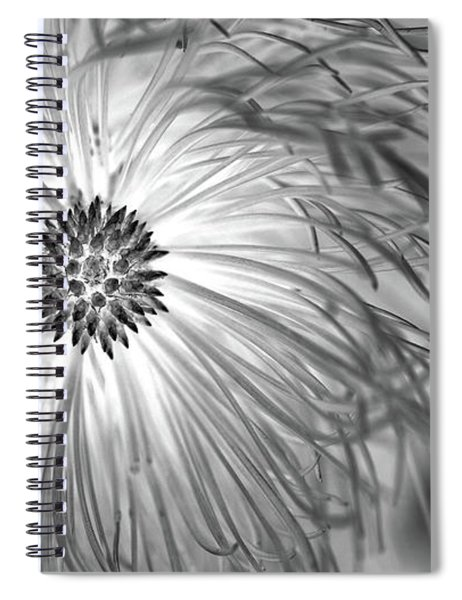 Pine Cone With Needle Halo Spiral Notebook