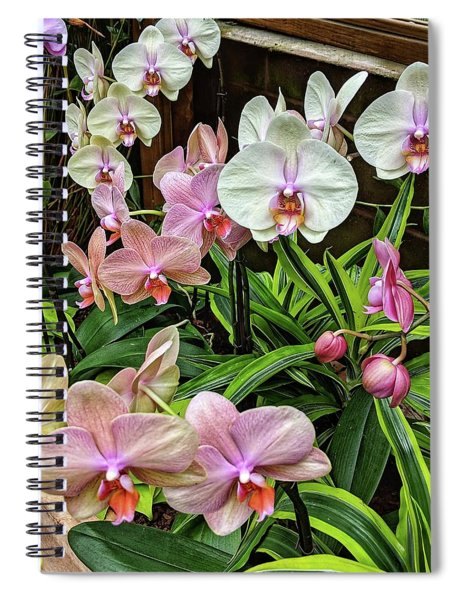 Pink And  White Orchids Spiral Notebook
