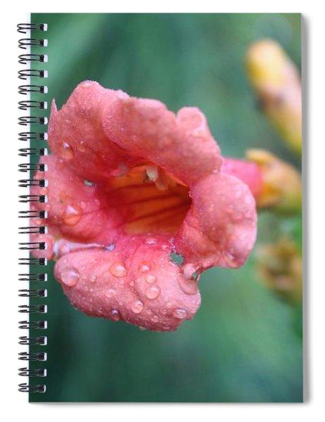 Pink Four O Clock Spiral Notebook