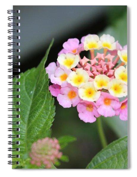 Pink Lantana Spiral Notebook