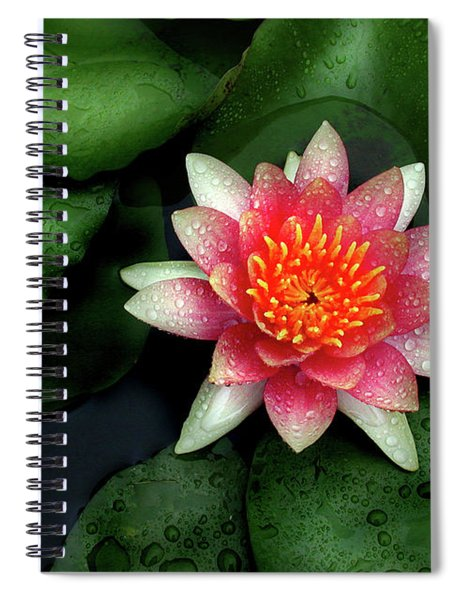Pink Lily Spiral Notebook