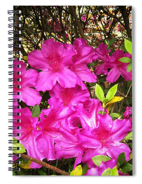 Pink Outside Spiral Notebook