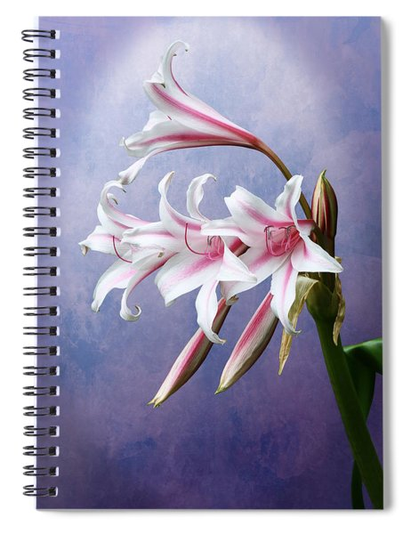 Pink Striped White Lily Flowers Spiral Notebook