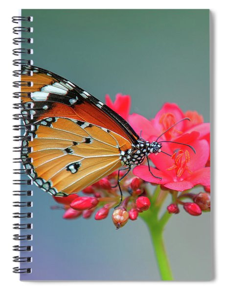 Plain Tiger Or African Monarch Butterfly Dthn0246 Spiral Notebook
