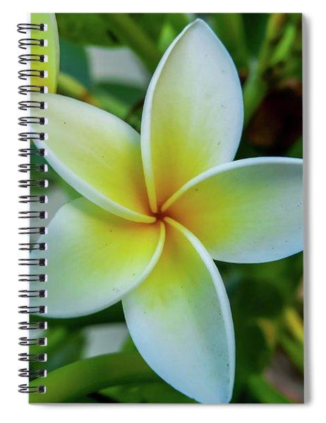 Plumeria In Bloom Spiral Notebook