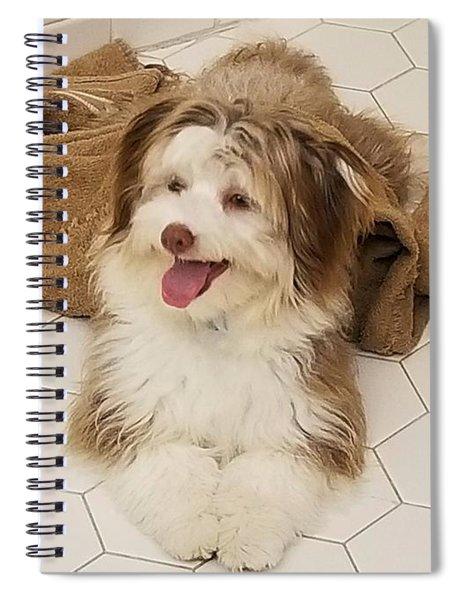 Poco - Chocolate Havanese Puppy Spiral Notebook