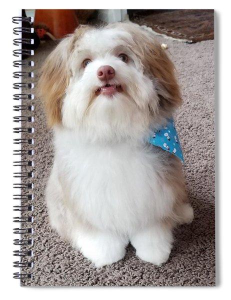 Poco The Havanese Puppy Spiral Notebook
