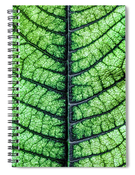 Poinsetta Leaf In Abstract Macro Spiral Notebook