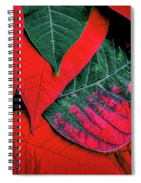 Poinsettia Caught In The Act Spiral Notebook