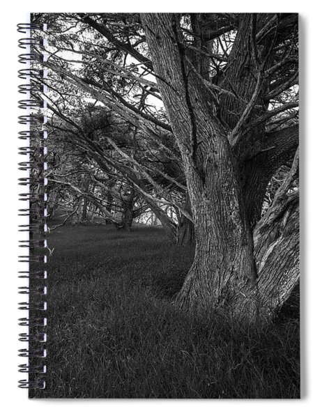 Point Lobos Cyprus Trees Grove Spiral Notebook
