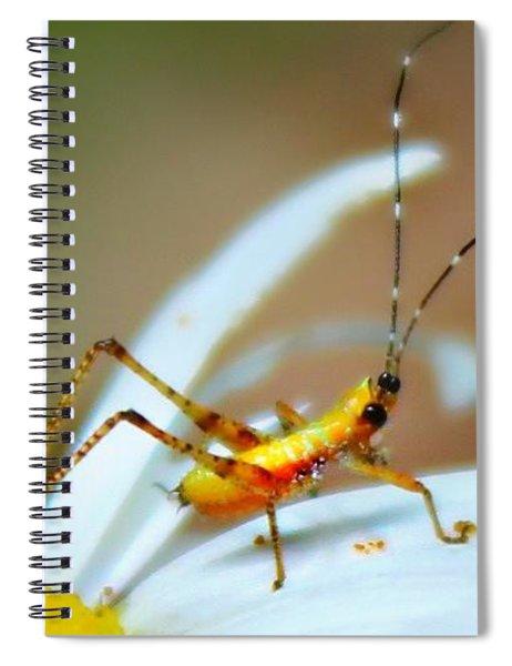 Pollen Tracks Spiral Notebook