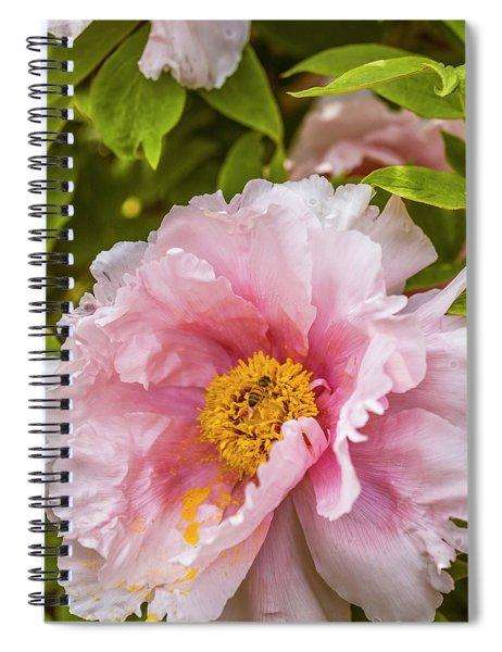 Pollen Trap Sprung Spiral Notebook